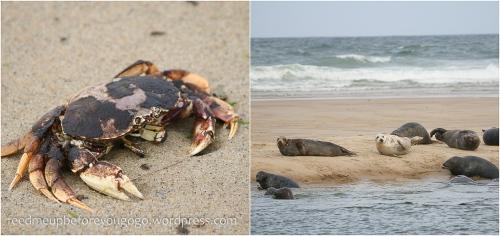 Cape Cod kulinarisch Food Tipps-21